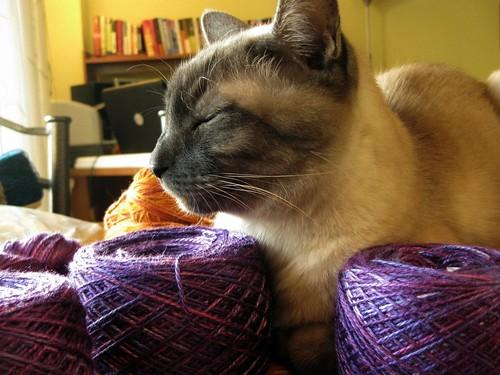 Purple Yarn + Happy Cat