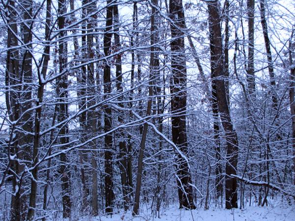 12-5-09 snow2