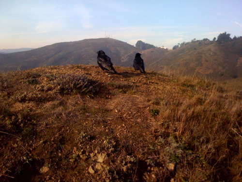 crows-on-a-ridge.jpg