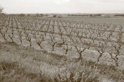 Vineyards near Capendu, southern France.
