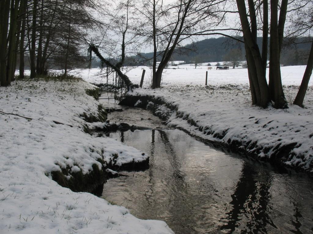 [White spirit] Vive la neige 78 4200087387_dec5698345_o
