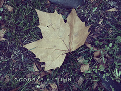 [ Goodbye autumn ] (Olga M. Soto) Tags: hello autumn winter lastday otoo invierno goodbye diciembre adis estacionesdelao