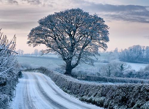 Ballybrannan tree