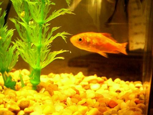 xmas fish