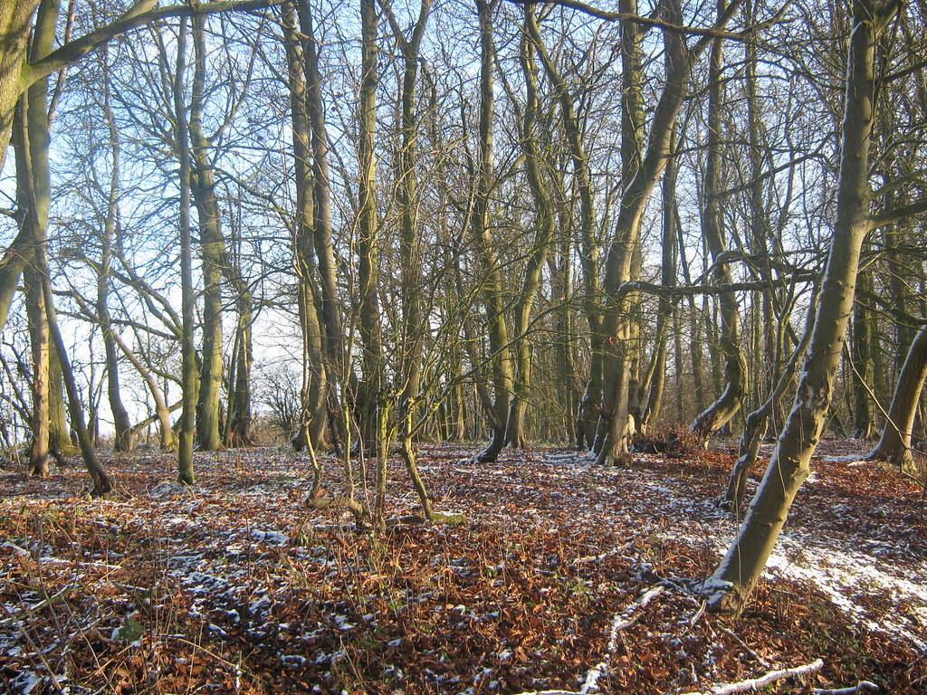 Bratt Wood near Nunburnholme, East Riding, East Yorkshire