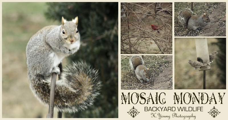 Mosaic Monday: Backyard Wildlife