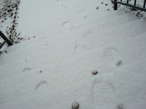 169/365 Snow Day