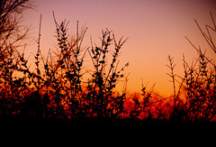 Bloody Sky (Kara Harms) Tags: trees winter sunset red sky orange sun colors evening blood branches bloody