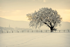 The Magic Tree (Stuart Stevenson) Tags: winter mountain snow storm cold tree church field fence scotland branches hill footprints valley mysterious lonelytree clydevalley snowcover pleaseviewlarge stuartstevenson