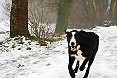 Dog in the Fog (Foggy Doggy) (A guy called John) Tags: park county trees ireland dog white snow black green nature fog speed grey big day cork foggy fast running run full ballincollig dull regional irlanda irlande