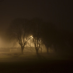 Bakers Park (Andy Brown (mrbuk1)) Tags: longexposure trees light mist grass night dark square moody chocolate atmosphere negativespace devon shroud sliver understated benches drama tone newtonabbot canon40d artofimages bestcapturesaoi