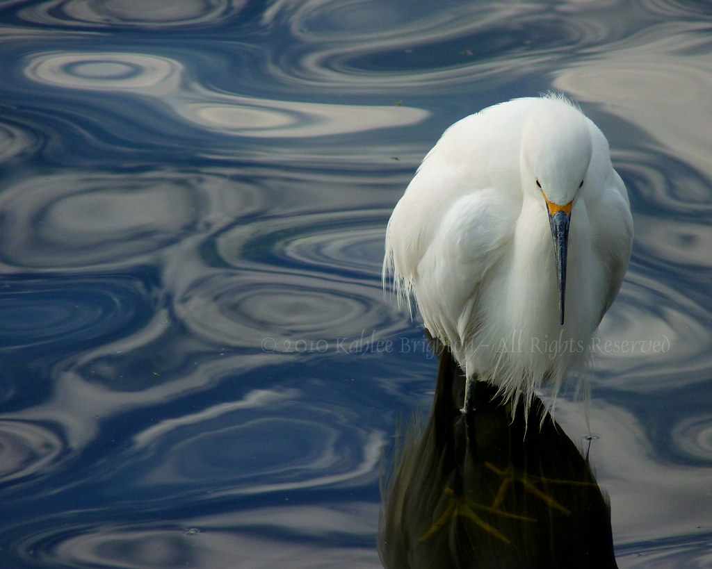 Egret Standing in Reflected Sky Swirls...