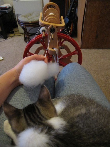 Lap Kitty and Spinning