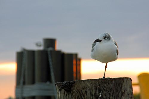 coastbird09