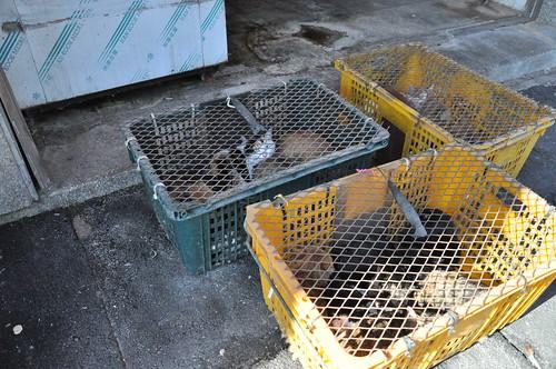 Gupo Market - Cats