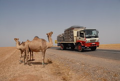 TRUCKING IN MOROCCO (Claude  BARUTEL) Tags: africa mountains sahara truck desert camel morocco atlas roads trucking isuzu