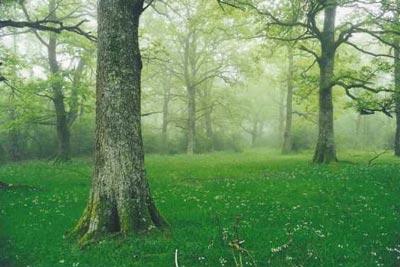 bosque-de-orgi-3