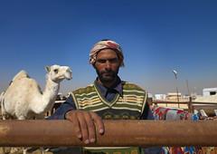 Camel keeper - Riyadh Saudi Arabia (Eric Lafforgue) Tags: man market hasselblad camel arabia souk saudiarabia souq ksa saudiarabien arabie h3d arabiasaudita kingdomofsaudiarabia   arabiesaoudite   suudiarabistan arabsaudi   saoediarabi arabiasaudyjska    ksa09840