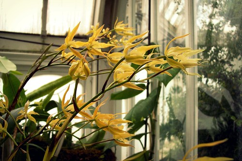 altered epidendrum