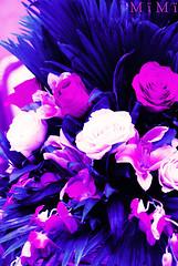 (M ï M ï) Tags: pink flowers blue party song sony 7 300 feb mohamed 2010 محمد كل ورد ع البال abdu وردي ازرق عبده التفاصيل mïmï