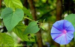 Bkt Tinggi - Flower (chernloon) Tags: flower d200 bukittinggi nikon1685