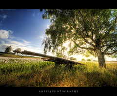 The First Light :: HDR (:: Artie | Photography :: Offline for 3 Months) Tags: wood flowers trees nature field grass photoshop canon landscapes flora cs2 australia wideangle poppies tasmania handheld grasses hobart cart 1020mm hdr artie 3xp sigmalens photomatix tonemapping tonemap woodencart greeneries 400d rebelxti