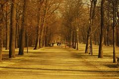 Camminare fino a perdersi. (Joe[insanely]) Tags: parco parma ducale seppia viale camminare perdersi alberato