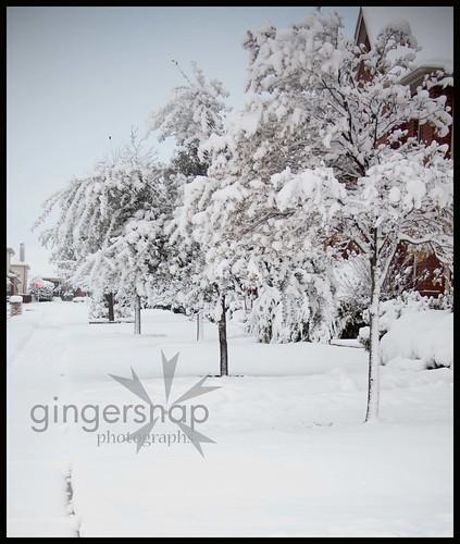 more snow 20101