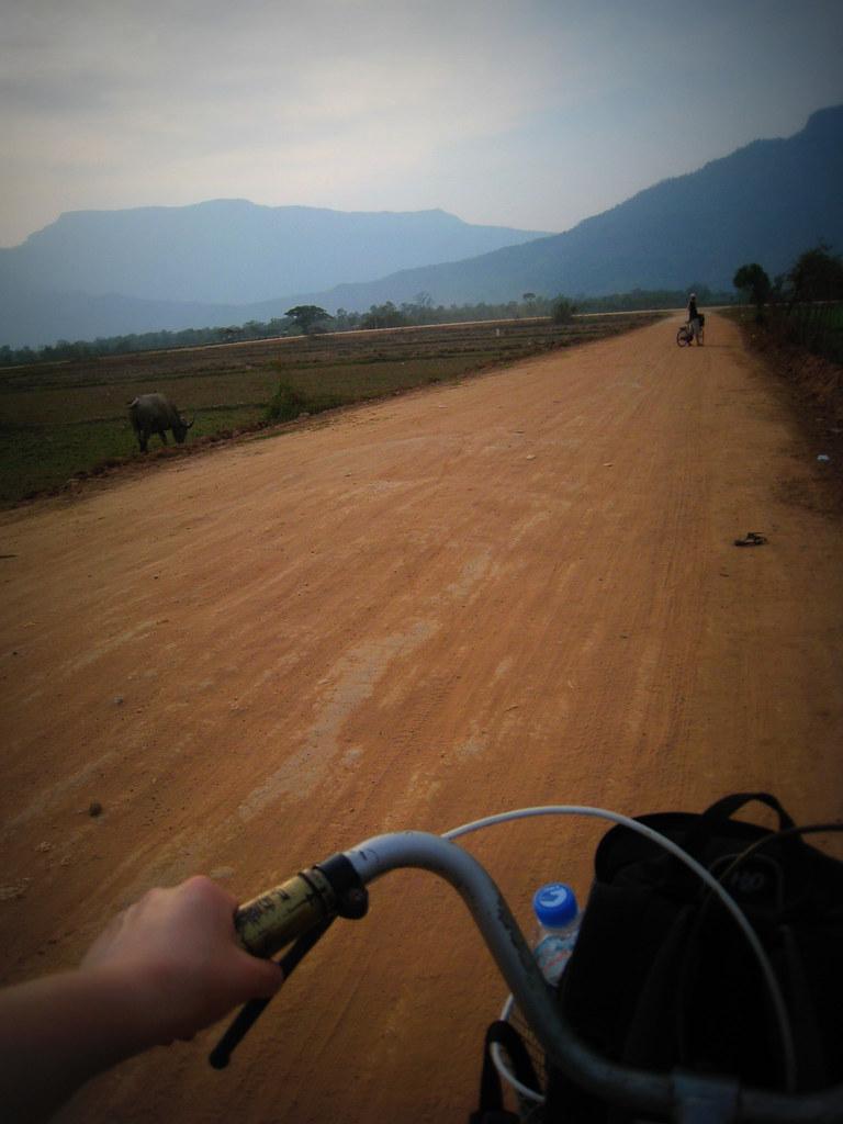 A vélo près des rizières.. et des buffles