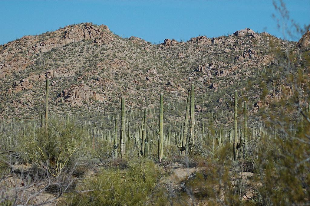 Saguaro Nat'l Park - Tucson Mtns