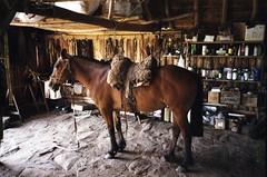 Pimp my ride (mm-j) Tags: november horse film 35mm uruguay scan contax negative 135 2009 t2 gaucho cerrochato