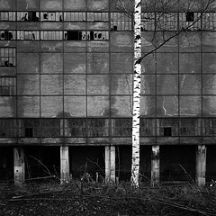 metro, bouleau, dodo (el crater) Tags: white plant black tree brick abandoned industry 6x6 film noir decay 66 hasselblad abandon coal mur arbre blanc industrie usine swc lavoir charbon wallbrique
