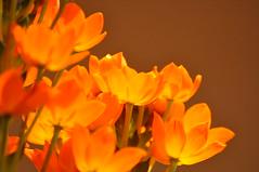 Orange Awesome