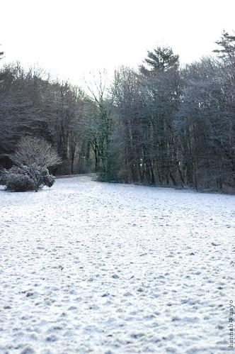 winter beauty, no.1