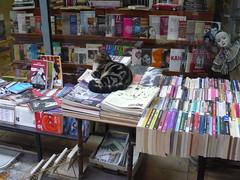 bookstore cat (22) (8pl) Tags: cat chat istanbul books livres librairie bookstore bookshop bookstores libreria librerias ruelle infinitexposure