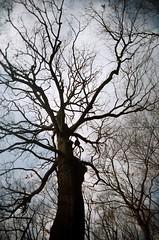 99150030_GIVING TREE