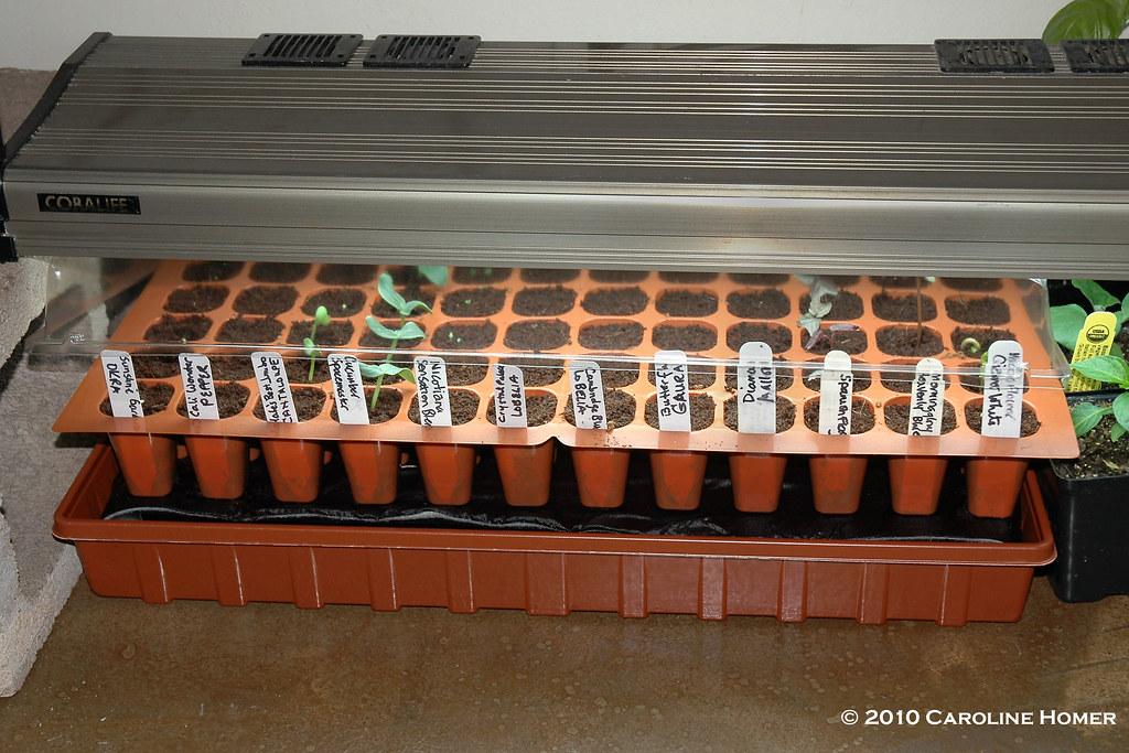 DIY Seed Starting System