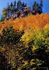 Vosges du Nord, l'automne (Alsace) (Excalibur67) Tags: mountain film nature forest montagne automne landscape nikon fuji couleurs nikonf100 arbres velvia alsace paysages vosges feuilles argentique velvia50 coth forets forts