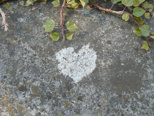 heart shaped lichen