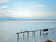 Kalochori biome (V and the Bats) Tags: trip travel sky water birds fauna thessaloniki cormorans  kalochori  sundayexplorations   travelingbats kalochoribiome