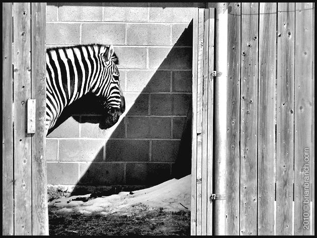 P1080984_zebra_lines