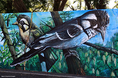 Vulnerable Species - Monarcha leucotis - White-eared monarch (Treasures of The Tweed Mural) (Black Diamond Images) Tags: australia nsw endangered rare commercialroad florafauna vulnerable nswaustralia t