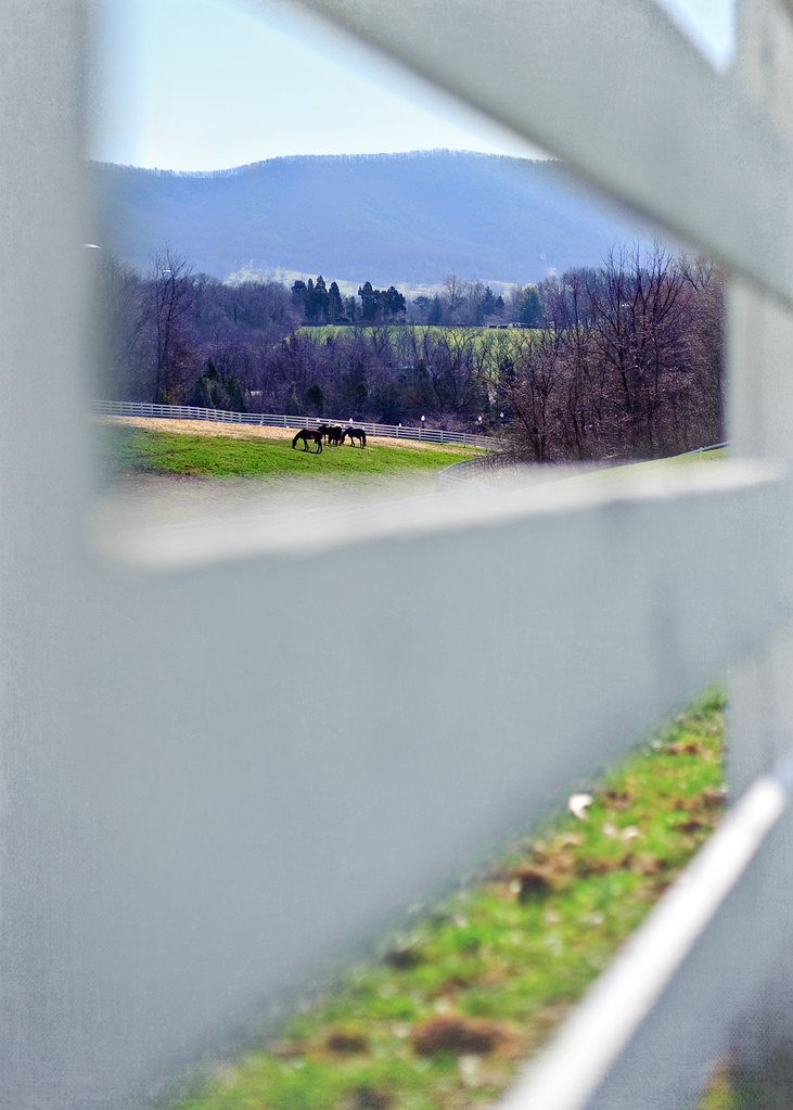 Fence Friday - Horses