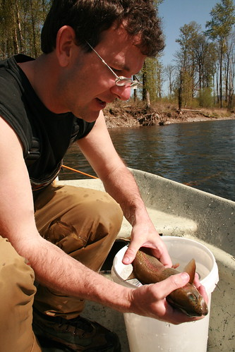 McKenzie River Trout Tagging Project