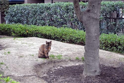 Today's Cat@2010-03-25