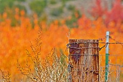 Fence Post at Embudo (fj40troutbum) Tags: newmexico southwest west fall colors canon fence landscape post taos nm hdr embudostation embudo