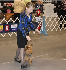 Iowa 2010 show 2nd place Open Junior