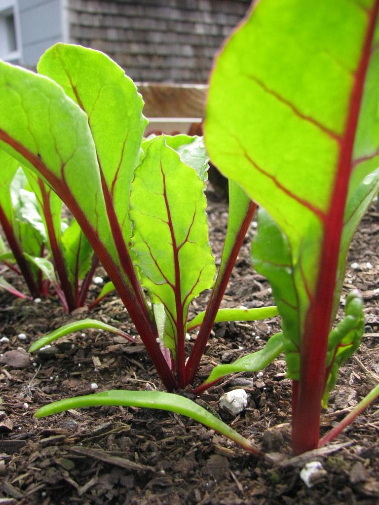 Pretty, pretty beets