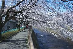 町田樹 画像36