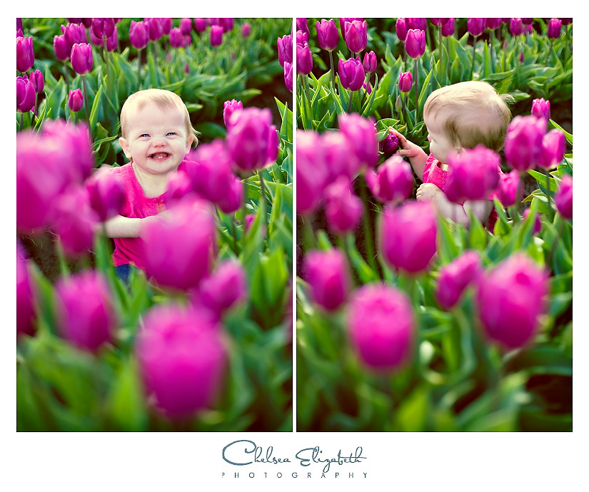 violet purple tulips  and toddler at wooden shoe tulip farm in oregon